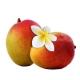 Fumari_Tropical_Mango_100g_Hookah_Shisha